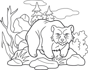 Cartoon funny bear coloring book