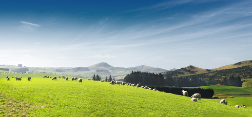 beautiful pasture with animals near hill Wall mural