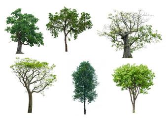 set 6 tree isolated on white