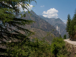 A beautiful day in the Himalayas, white clouds, and pine Himalayan surroundings of Shimla, India