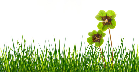 meadow with four leaf clover