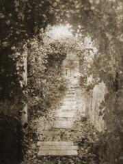 Vintage Jasmin covered garden pathway