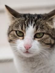 Portrait of a cat face, closeup face