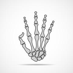Hand bone skeleton. Vector illustration