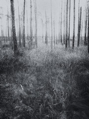 Etherial forest landscape with grassy foreground