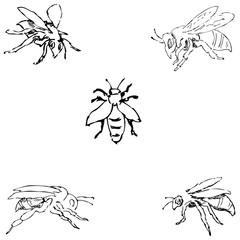 Flies. Sketch by hand. Pencil drawing. Vector image