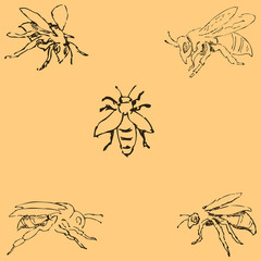 Flies. Sketch by hand. Pencil drawing by hand. Vector image. The image is thin lines. Vintage