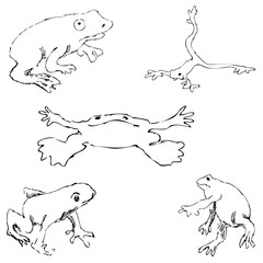 Frogs. Sketch by hand. Pencil drawing by hand. Vector image. The image is thin lines