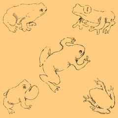 Frogs. Sketch by hand. Pencil drawing by hand. Vector image. The image is thin lines. Vintage