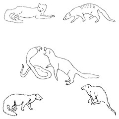 Mongoose. Sketch by hand. Pencil drawing by hand. Vector image. The image is thin lines