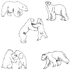 The Bears. Sketch by hand. Pencil drawing by hand. Vector image. The image is thin lines