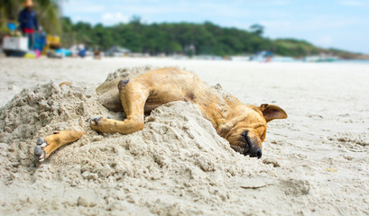 Dog sleeping on a beach covered with sand