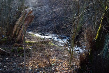 spring in a forest with a stream and old willow