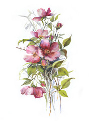 Hand-drawn watercolor tender summer blossom. Artistic dog rose flowers. Natural illustration for the decorative design on the white background.