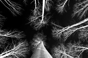 Black and white beautiful negative photo of trees from below, abstraction