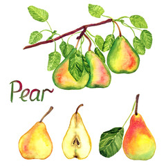Pear branch with fruits, green, red and yellow pears with leaves and cut slices, isolated hand painted watercolor illustration