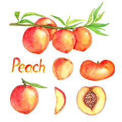 Peaches branch with fruits, peaches variety and cut slices, isolated set hand painted watercolor illustration