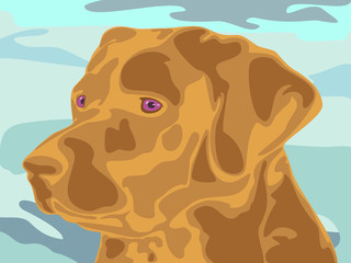vector illustration of labrador's head in original style