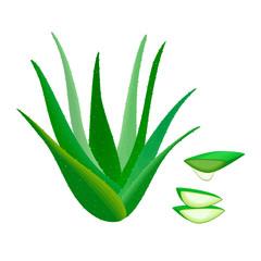 Aloe Vera whole and slices, juice drop. Herbal medicine