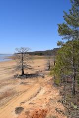 Tree along the shorline of Enid Lake in Mississippi