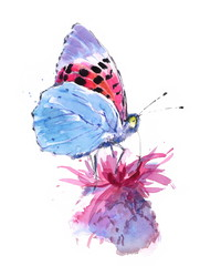 Watercolor Blue and Pink Butterfly Sitting on a Flower Hand Painted Summer Illustration isolated on white background