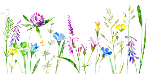 Floral border of a wild flowers and herbs on a white background.Buttercup, clover,bluebell,vetch,timothy grass,lobelia,spike. Watercolor hand drawn illustration.