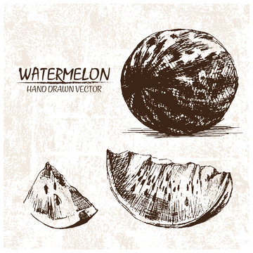 Digital vector detailed watermelon hand drawn retro illustration collection set. Thin artistic linear pencil outline. Vintage ink flat style, engraved simple doodle sketches. Isolated objects