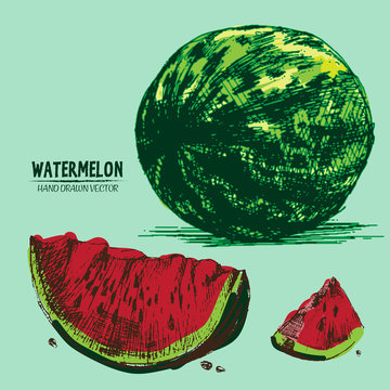 Digital vector detailed color watermelon hand drawn retro illustration collection set. Thin artistic linear pencil outline. Vintage ink flat style, engraved simple doodle sketches. Isolated objects