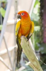 beautiful of colorful parrot bird