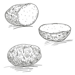 Vector hand drawn ripe potatoes. Natural eco food engraved vintage style illustration. Isolate of white background.