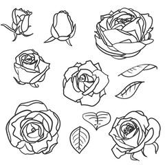 Set of rose flowers elements in vintage style. Hand drawn botanical vector illustration. Floral design