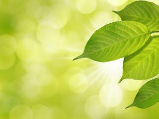 grüne Blätter im Frühling auf sonnigem Hintergrund