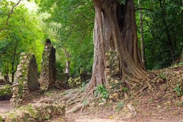 Kenya, Gede ruins laid in the vicinity of the Malindi resort