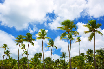 Palm trees and blue sky .