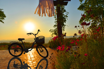 Silhouette of bicycle in flower garden and sunset at evening time.
