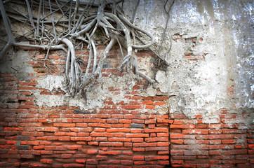 root wood covered brick wall