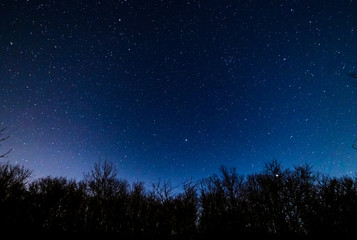 Starry sky over the forest.