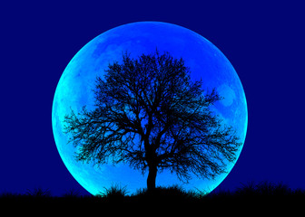 "Lone Tree with blue Moon - ""Elements of this Image Furnished by NASA"""