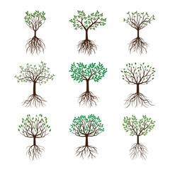 Set spring Trees with Leafs and Roots. Vector Illustration.