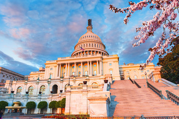 US Capitol at sunset with blooming cherry on foreground