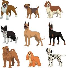 Set purebred dogs.