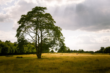 A beautiful landscape of a park in London