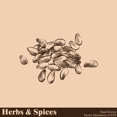 Hand drawn sesame isolated on beige background. Herbs and Spices sketch style vector illustrator.