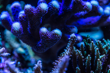 Close up of coral