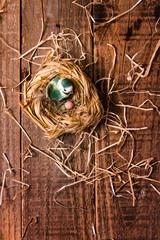 Uccellino nel nido