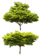 Group of tree isolated on white background for design material
