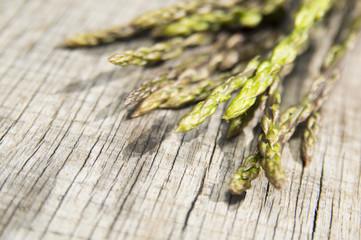 Garden asparagus (Asparagus officinalis)