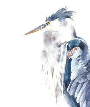 Blue heron bird portrait watercolor painting illustration isolated on white background