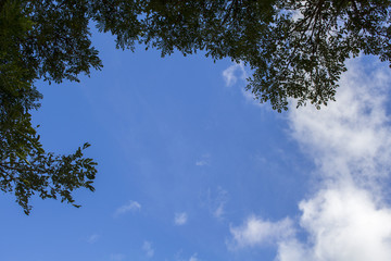 Natural background with blue sky and leaves. Tree branch silhouette.