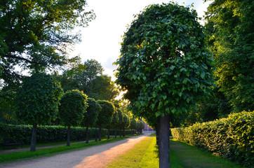 Green landscape in Kuskovo park